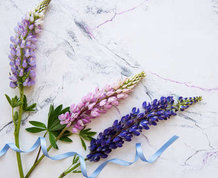 Pink and purple lupine flowers border on a white marble background