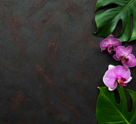 Tropical leaves monstera and  orchid flowers on a black concrete background Stock fotó