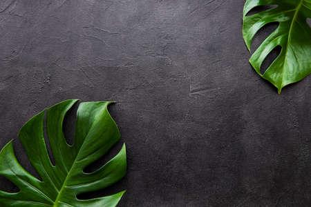 Tropische Blätter monstera auf schwarzem Betonhintergrund Standard-Bild
