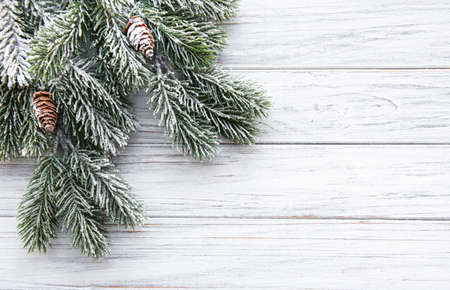 Christmas tree branch with snow and pine cones on white wooden  background with copy space