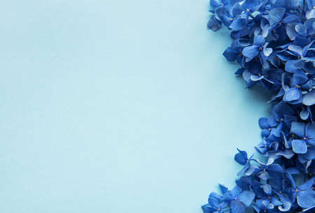 Blue hydrangea flowers on blue pastel background. Floral border. Flat lay.  Фото со стока