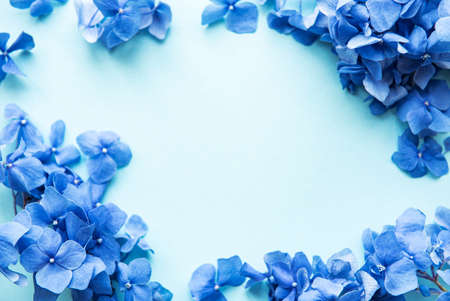 Blue hydrangea flowers on blue pastel background. Floral border. Flat lay.