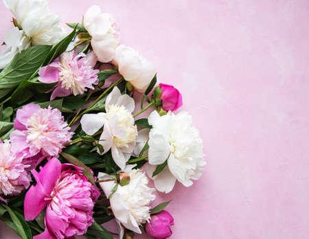Fondo con peonías rosas sobre un fondo de hormigón rosa Foto de archivo