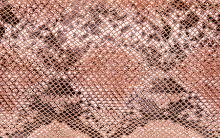 Snake skin pattern, natural background, top view