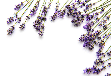 Fresh flowers of lavender bouquet, top view on white background 免版税图像