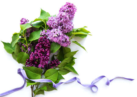 Lilac in flat style on white background. Beautiful spring. Overhead view. Flat lay, top. Summer season. Natural spring style. Standard-Bild