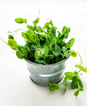 Cup with green sprouts of germinated seeds of peas on a table