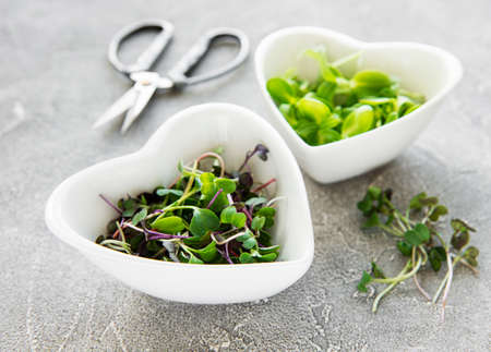 Assortment of micro greens at concrete background, top view. Healthy lifestyle