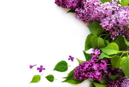 Lilac in flat style on white background. Beautiful spring. Overhead view. Flat lay, top. Summer season. Natural spring style.