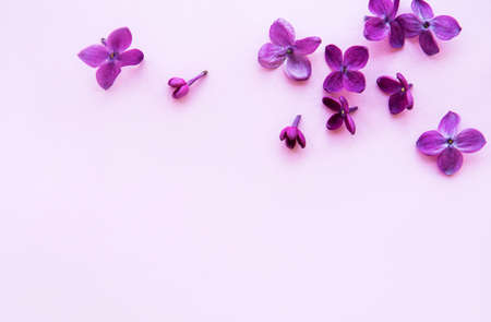 Lilac flowers, border on a pink background. Flat lay, top view.