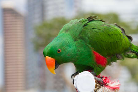 talon: Green Parrot Stock Photo