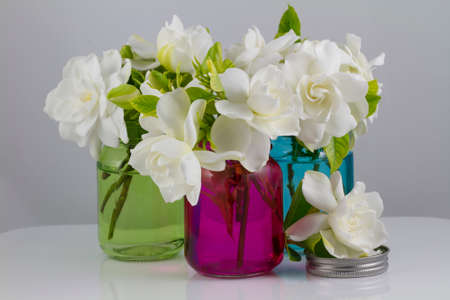 Bouquet of fresh White Gardenias placed in small red green and blue mason jars on white or black background as a decoration for a table photo