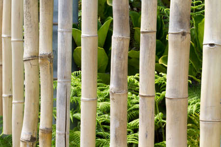 Strand of bamboo chimes hanging from a twine to create tropical sounds