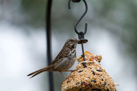 bird feeder: A Finch perched on a bird feeder eating the seeds and sweets