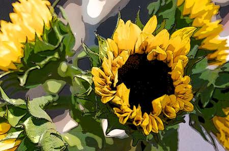 girasol: Hermosos girasoles en flor en un día de verano