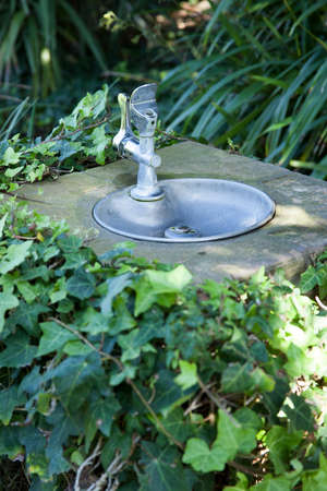 tranquility: An Ivy covered drinking fountain at the Tranquility Gardens in Encinitas, California Stock Photo