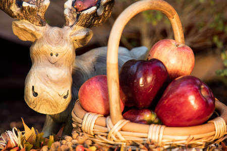 sycamore: Wicker basket filled with autumn apples surrounded by Sycamore leaves Stock Photo
