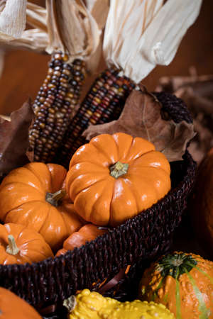 gourds: Orange Pumpkins, small gourds and Indian corn set on a table as a Thanksgiving decoration