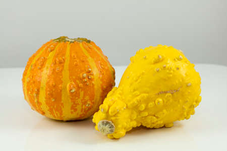 bumpy: Yellow, Orange and bumpy gourd used for decor or cooking Stock Photo