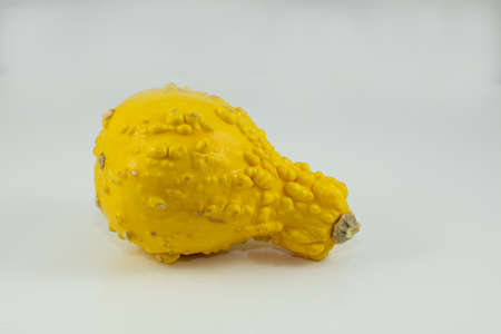 bumpy: Yellow and bumpy gourd used for decor or cooking