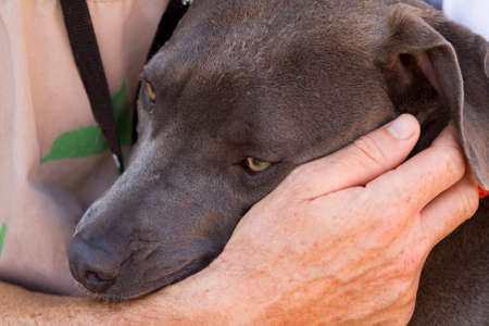 frienship: Man holding and caring for a rescue dog