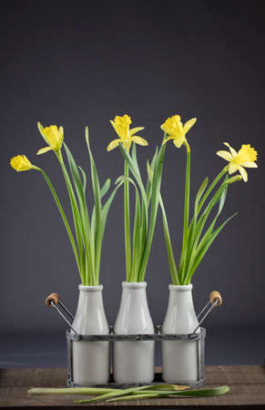 Bouquet of yellow Daffodils for Easter Stock Photo
