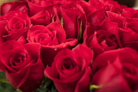 rosoideae: Bouquet of Red Roses for Mothers Day or Valentines as a loving gift Stock Photo