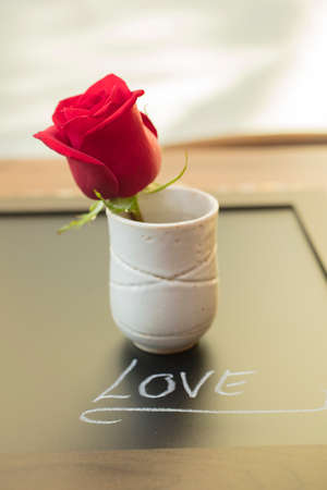 rosoideae: One Red Rose in a cup for Mothers Day or Valentines as a loving gift