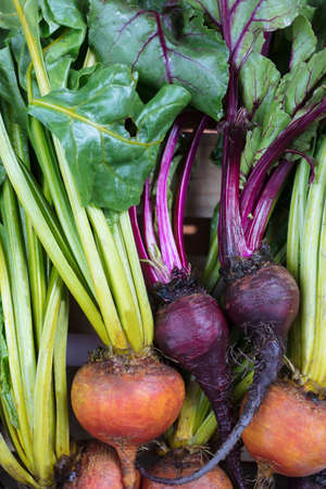 A bunch of golden and purple beets laying on a crate