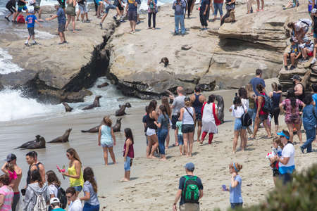 A Crowd of residents and  tourists interacting with the seals in La Jolla, California