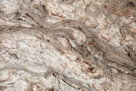 Curves and swirls in the peeling bark of an Australian Tea Tree