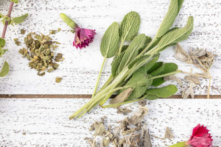 Fresh and Dry Sage with edible flowers on a rustic table top Stockfoto