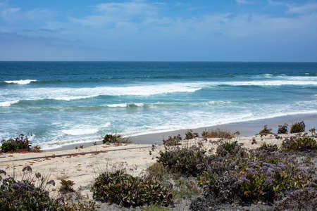 Coastal landscape view of Sea Lavender, sand and water in Del Mar, San Diego,California Imagens