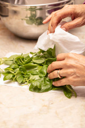 Hands of a person cleaning basil and preparing it for a food class Stok Fotoğraf