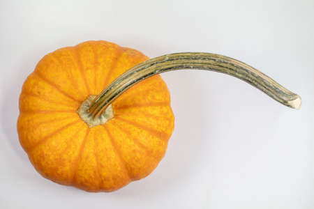Long stemmed orange pumpkin isolated on white background closeup