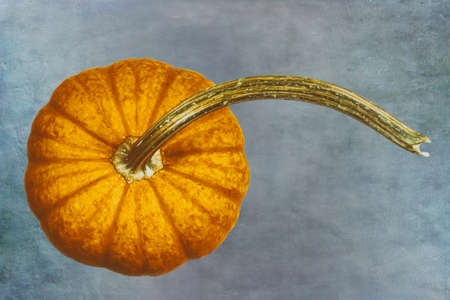 Golden Pumpkin on a Painterly Background Stok Fotoğraf