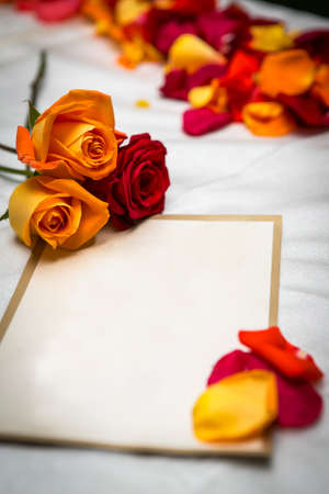 Red and orange roses and petals on a blank card invitation for a wedding or announcment