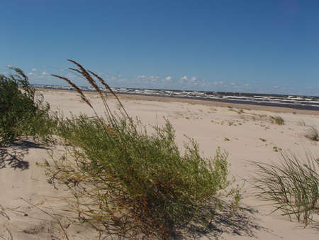 herbage: Baltic Sea on Liepene - beach and herbage. Latvia Stock Photo