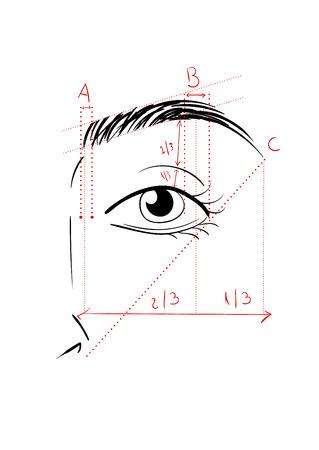 esquema: Ilustración del vector de la cara de la mujer y la cartografía de la ceja. Cómo darle forma en casa. consejos de maquillaje. arcos que están perfecta
