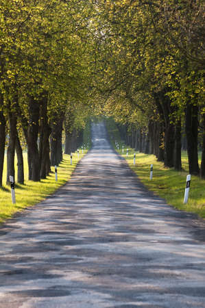 Country Road in East Germany, typical view. Stock Photo