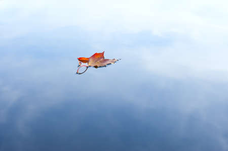 Maple leaf floating on a lake in autumn. Copy Space. photo