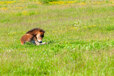 Foal on the Meadow photo