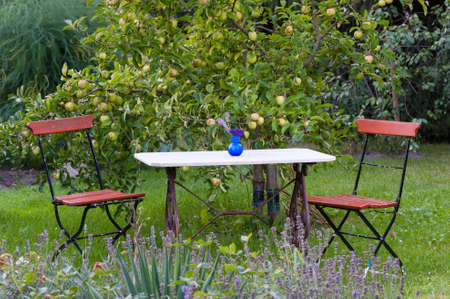 Garden table and chairs under a citrus tree laden with fruit in a lush green backyard photo