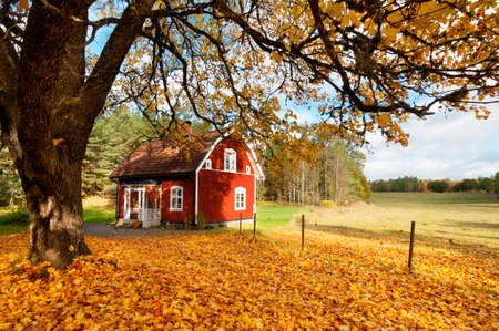 Picturesque fall background of a quaint traditional red Swedish house amongst a carpet of yellow orange autumn leaves in a peaceful country landscape