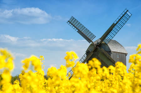 Old wooden windmill surrounded by fields of rape in spring   photo