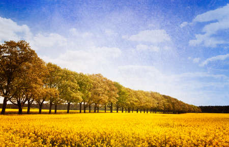 Allee in the historic landscape Mark Brandenburg, Germany, surrounded by blooming rape fields  Textured picture photo