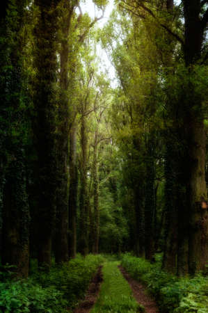 Dirt way in a magical forrest in a forgotten castle park. Textured picture. Stock Photo