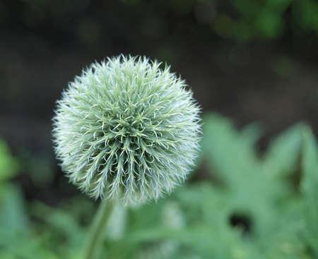 eigenaardig: Bijzondere ronde en symmetrische bloem bol