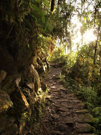 Inca road jungle Stock Photo - 11965055