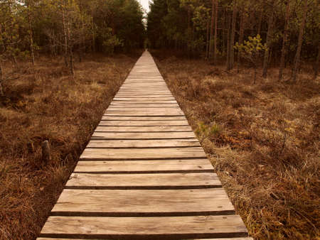 swampland: Wooden path stretching through swampland Stock Photo